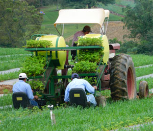 Baugher's employs seasonal workers to pick the crpos in Westminster, Maryland.