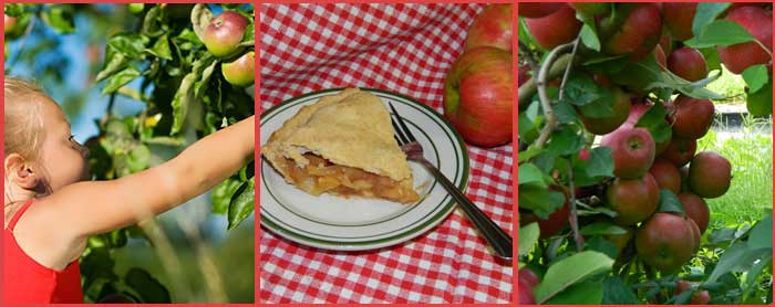 picking apples at Baughers and making wonderful apple pie when getting home.